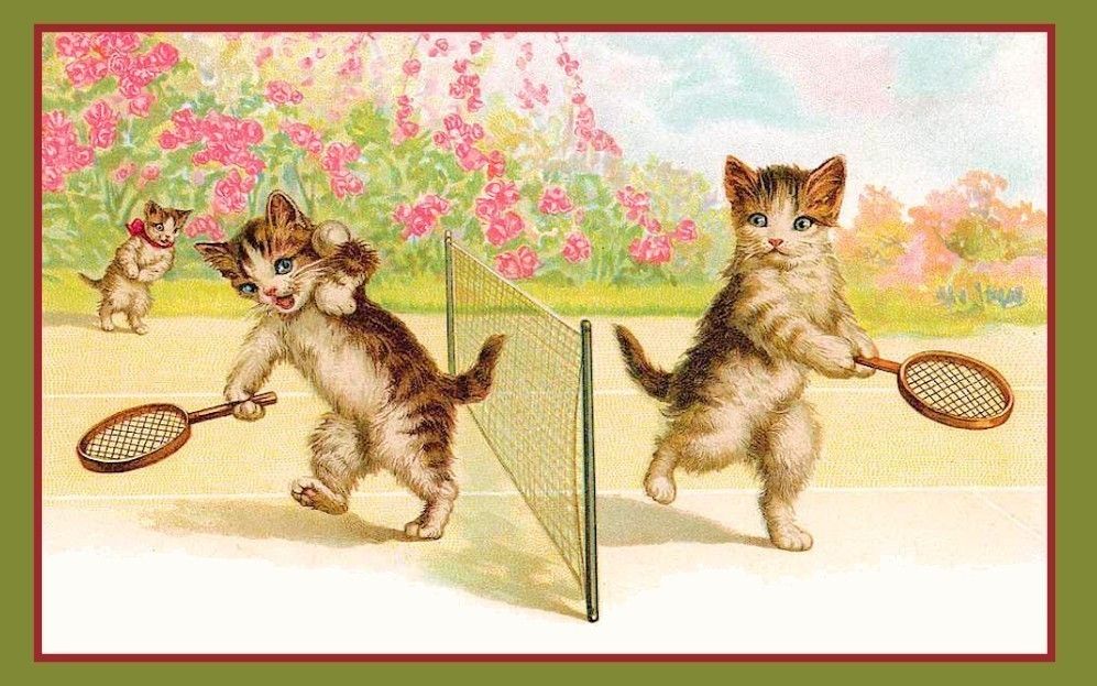 cats playing tennis